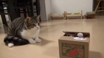 ボタンを押すとおもちゃの猫が出る貯金箱に夢中の猫が可愛すぎる