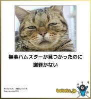 ネコでボケて-4