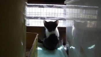 thumb-お腹いっぱいで外を眺める仔猫。あれれ?-もしかして(-´ェ`-)