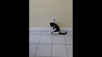 thumb-前髪切りすぎた!みたいな柄の猫が面白可愛い(ΦωΦ)