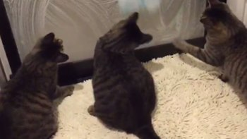 お風呂の磨りガラスの掃除中。裏側にいた猫は・・・。