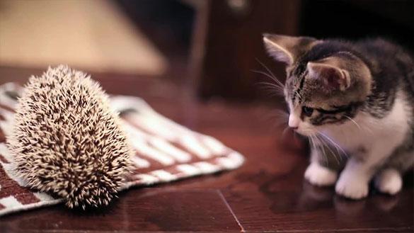 仔猫とハリネズミ。まだちょっとお互いが怖いけど友だちになれるかな?