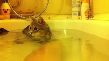 いい湯だにゃ♪-にゃははん〜。飼い主さんとお風呂に入って何だか気持ちよさそうな猫