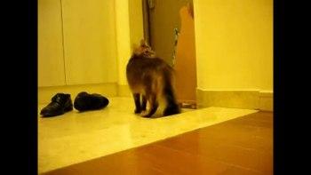早く帰らなきゃ。 甘えん坊の猫のお留守番中の様子
