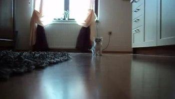 thumb-お母さんどこぉ? 母猫がちょっとどこかに行って寂しそうな仔猫