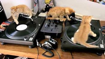 thumb-DJ-仔猫が奏でるキュンキュンビートに心躍る