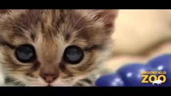 世界最小の猫の赤ちゃんがお目々くりくりでとってもかわいい!