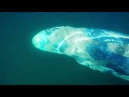 サーファーがコククジラに遭遇する超神秘的な瞬間が凄いと話題に