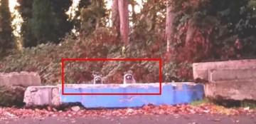 Whack a Raccoon   YouTube