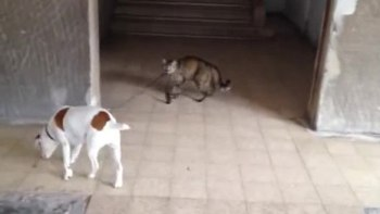 はいはい、帰りますよー。犬のリードをひっぱりお家に連れて帰る猫