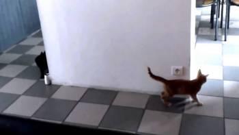 先輩猫が後輩猫を見事に出し抜く様子がおもしろ可愛い♪