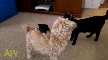 ぜったい離さないにゃ!-どうしてもわんちゃんの背中に乗りたい子猫