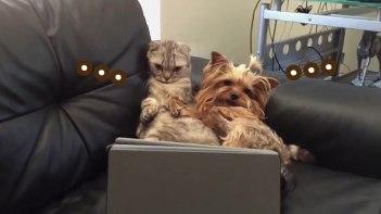 中に人がいる!?-人間のようにソファでまったりとくつろぎながら動画鑑賞を楽しむ犬と猫