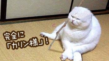 完全に「カリン様」なネコが発見されてTwitterで話題に!