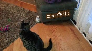 ソファを巧みに使い大人のネコを徹底的におちょくるかわいい子猫!
