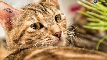 ネコの「ボケて」が思わず笑っちゃう!-また明日から頑張ろう!