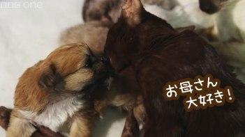 母犬に捨てられた子犬。引き取ったのは優しいネコのお母さんでした。