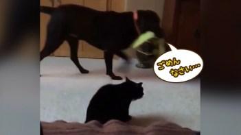 オモチャを取り合ってケンカする犬を収めたのはネコの一喝でした。犬の申し訳なさそうな態度に注目!