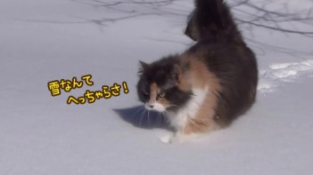 雪なんてへっちゃら!-もふもふネコがズンズン歩く
