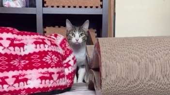 ネコミサイル!-ジャンプするネコをスローモーションで撮ってみた