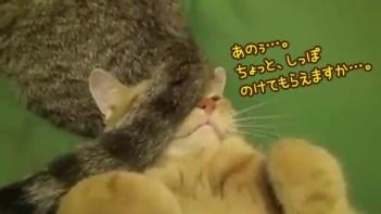 ボクは寝たいのに…。すぐ隣でくつろぐネコのしっぽにちょっとイライラ(笑)