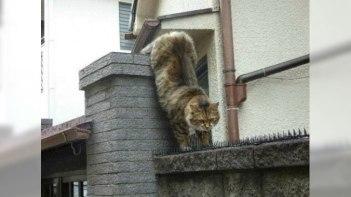 とげの山を越えてネコが向かったのは?-とってもほんわかな物語がありました!