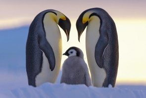 penguin-awareness-day-photography-101