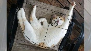 ネコは可愛くそして美しい。その理由がついに判明!