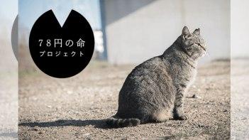 「動物殺処分の費用78円」12歳の少女が綴った「78円の命」に多くの共感の声。その思いを伝えたい