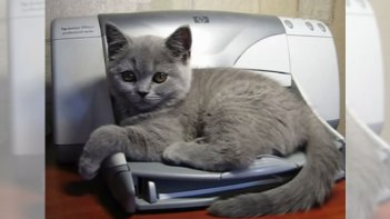 【お約束】プリンターの上でリラックスしている子猫。プリンターが始まると・・・