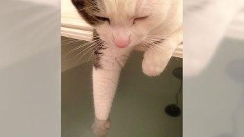 湯加減はどうかな?・・・気持ち良すぎて寝ちゃったネコさん