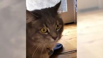 ドアの向こうでウチのネコさんが鳴いている・・・ドアを開けると嬉しいサプライズが!