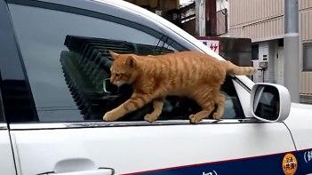 ボクこんなところ歩けるよ!ドアの縁を歩くネコ。失敗して落ちるもただでは起きない