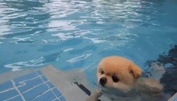i just melted into a pool of cuteness   GIF on Imgur