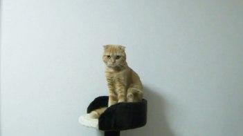 びにょ〜ん。なんかちょっと違う「伸び」をするネコさん