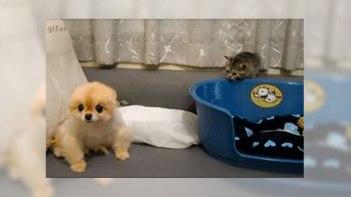 犬さんにイタズラしちゃお!-子ネコのイタズラは犬にはバレバレ