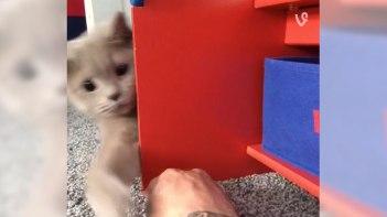 棚の向こうにネコさんが・・・飼い主さんが指で遊ぼうとすると