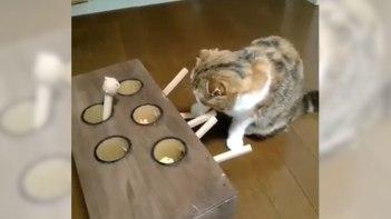 セルフモグラたたきで遊んでいるネコさん-自分で楽しんでいたのに・・・