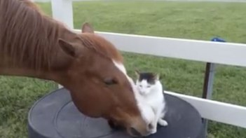 馬さん大好き♥-馬ととっても仲良しなネコさん一緒にお昼寝