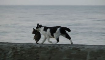 あふれる親子愛を感じさせるハートフルな物語!海辺を歩くネコさん親子の姿に胸が熱くなる