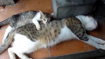 お兄ちゃん大好き♥どこへ行くにも何をするにもお兄ちゃんにべったりな子ネコさんにホッコリウットリ♥
