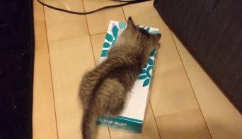01遊びじゃなかった!子ネコさんの下に注目!ティッシュ箱の中で起きていたこととは??