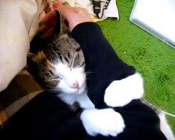 01「絶対に離さないにゃ♪」こんな風にされてみたい!飼い主さんの腕に抱きつくネコさん
