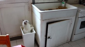 流しの上に乗りたい!蓋のないゴミ箱を踏み台にしようとしたら・・・見事に失敗!でも何度でもチャレンジ!