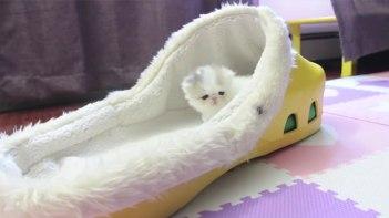 生後4週間のちっちゃな子ネコさんスリッパのフカフカベッドでウトウト!