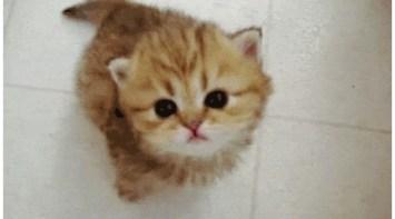 かわいい猫のgif貼ってくれ ハムスター速報