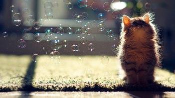 キュンキュン間違いなし!かわいい子ネコさんの写真15選!
