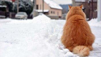 後ろ姿もかわいいネコ写真・・・みんなでお顔を想像しよう!