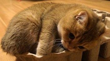 狭いところ大好き!ネコさんが狭いスペースに一生懸命収まる動画がめっちゃ可愛い!