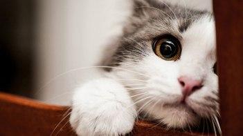 思わずため息が出るほど美しい・・・可愛いだけじゃないネコさんの魅力が詰まった写真15枚